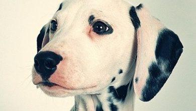 Bilder Vom Schäferhund Kostenlos 390x220 - Bilder Vom Schäferhund Kostenlos