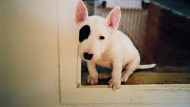 Bilder Vom Schäferhund Kostenlos Herunterladen 390x220 - Bilder Vom Schäferhund Kostenlos Herunterladen