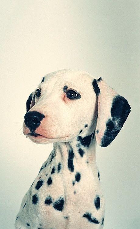 Bilder Vom Schäferhund Kostenlos - Bilder Vom Schäferhund Kostenlos