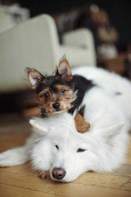 Bilder Von Allen Hunderassen Für Facebook - Bilder Von Allen Hunderassen Für Facebook