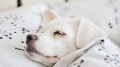 Bilder Von Einem Hund 390x220 - Bilder Von Einem Hund