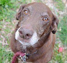 Bilder Von Einem Hund Für Facebook 233x220 - Bilder Von Einem Hund Für Facebook