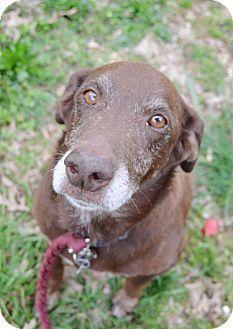 Bilder Von Einem Hund Für Facebook - Bilder Von Einem Hund Für Facebook