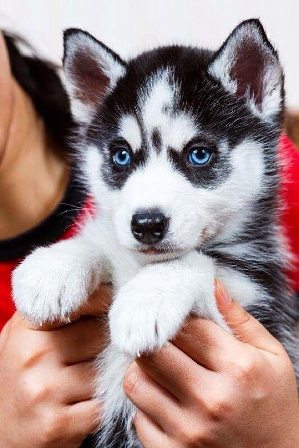 Bilder Von Einem Hund Kostenlos - Bilder Von Einem Hund Kostenlos