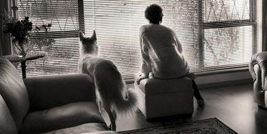 Bilder Von Hundebabys Kostenlos Herunterladen 390x197 - Bilder Von Hundebabys Kostenlos Herunterladen