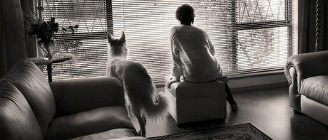 Bilder Von Hundebabys Kostenlos Herunterladen - Bilder Von Hundebabys Kostenlos Herunterladen