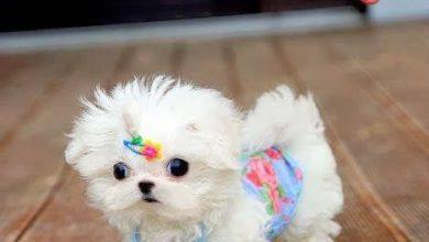 Bilder Von Hunden Für Facebook 390x220 - Bilder Von Hunden Für Facebook