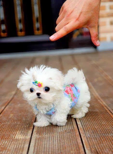 Bilder Von Hunden Für Facebook - Bilder Von Hunden Für Facebook