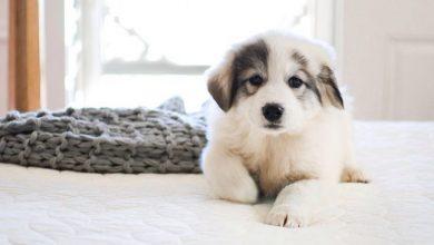 Bilder Von Hunden Für Whatsapp 390x220 - Bilder Von Hunden Für Whatsapp
