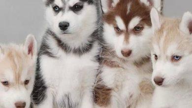 Bilder Von Hunden Kostenlos 390x220 - Bilder Von Hunden Kostenlos