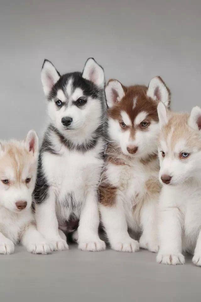 Bilder Von Hunden Kostenlos - Bilder Von Hunden Kostenlos
