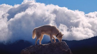 Bilder Von Hunden Zum Ausdrucken 390x220 - Bilder Von Hunden Zum Ausdrucken