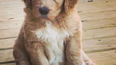 Bilder Von Hunden Zum Ausdrucken Für Facebook 390x220 - Bilder Von Hunden Zum Ausdrucken Für Facebook
