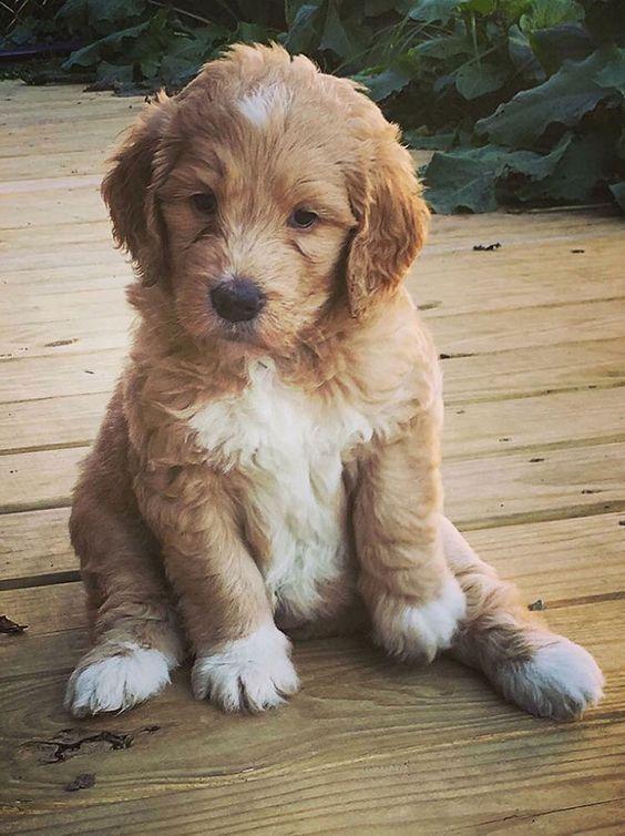 Bilder Von Hunden Zum Ausdrucken Für Facebook - Bilder Von Hunden Zum Ausdrucken Für Facebook