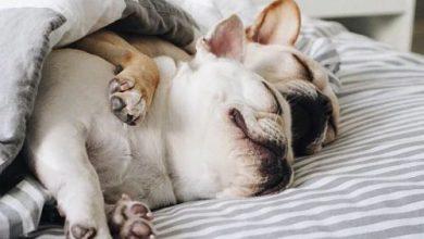 Bilder Von Hunden Zum Ausdrucken Kostenlos Herunterladen 390x220 - Bilder Von Hunden Zum Ausdrucken Kostenlos Herunterladen