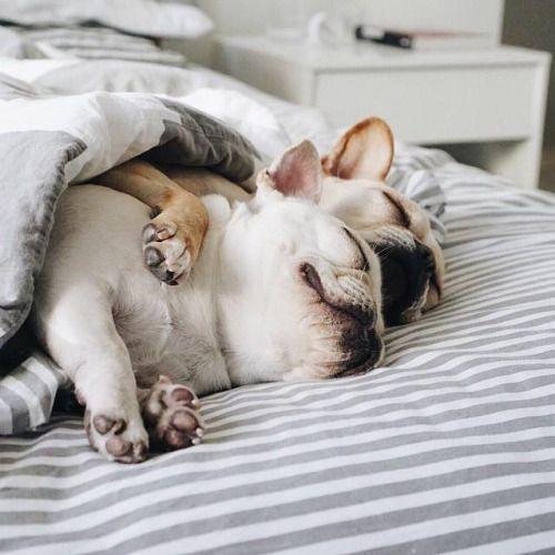 Bilder Von Hunden Zum Ausdrucken Kostenlos Herunterladen - Bilder Von Hunden Zum Ausdrucken Kostenlos Herunterladen