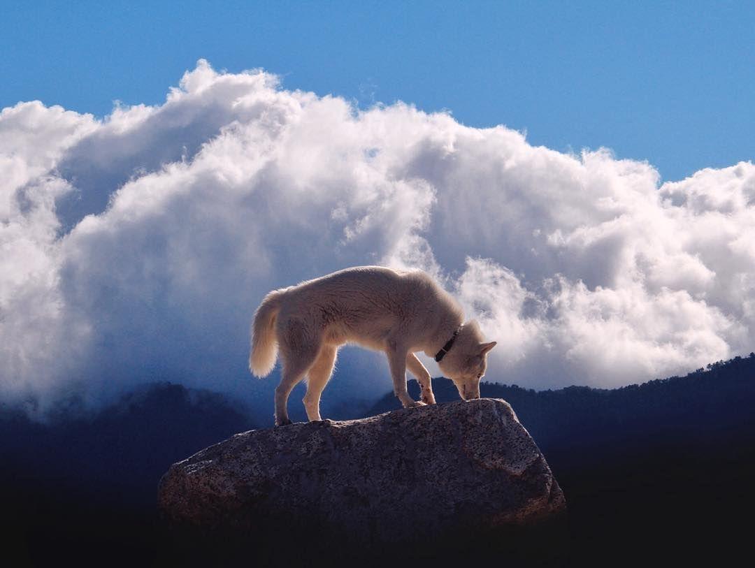 Bilder Von Hunden Zum Ausdrucken - Bilder Von Hunden Zum Ausdrucken