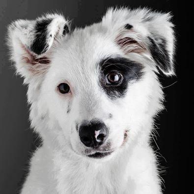 Bilder Von Hunden - Bilder Von Hunden
