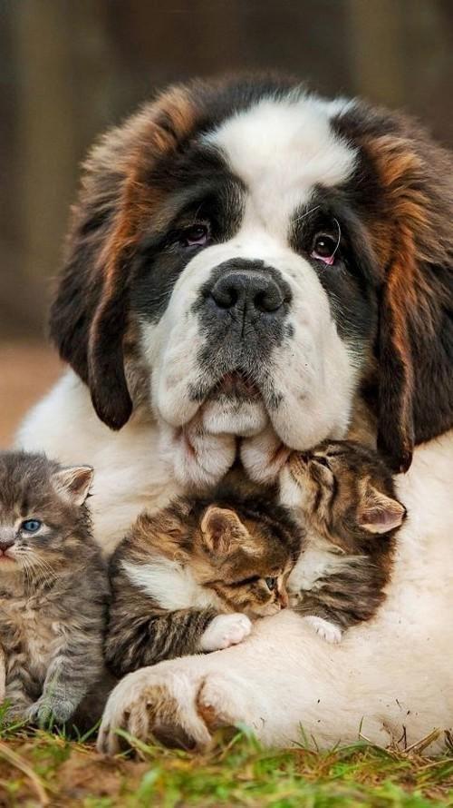 Bilder Von Hunderassen Für Facebook - Bilder Von Hunderassen Für Facebook