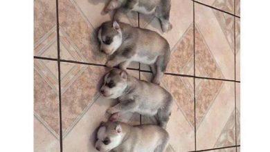 Bilder Von Hundewelpen Für Whatsapp 390x220 - Bilder Von Hundewelpen Für Whatsapp