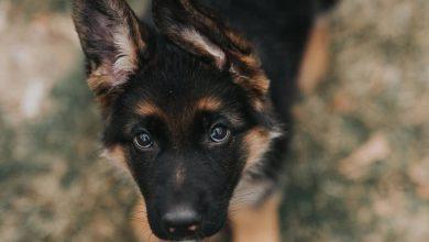 Bilder Von Hundewelpen Kostenlos 390x220 - Bilder Von Hundewelpen Kostenlos