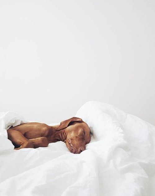 Bilder Von Hundewelpen - Bilder Von Hundewelpen
