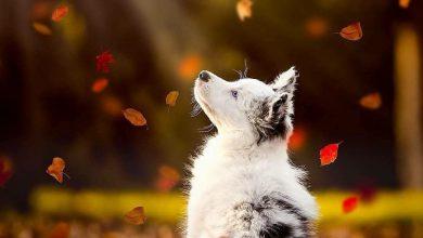 Bilder Von Kleinen Hunden Für Whatsapp 390x220 - Bilder Von Kleinen Hunden Für Whatsapp
