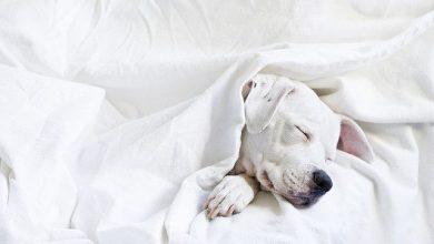 Bilder Von Kleinen Hunden Kostenlos Herunterladen 390x220 - Bilder Von Kleinen Hunden Kostenlos Herunterladen