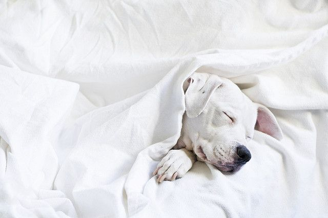 Bilder Von Kleinen Hunden Kostenlos Herunterladen - Bilder Von Kleinen Hunden Kostenlos Herunterladen