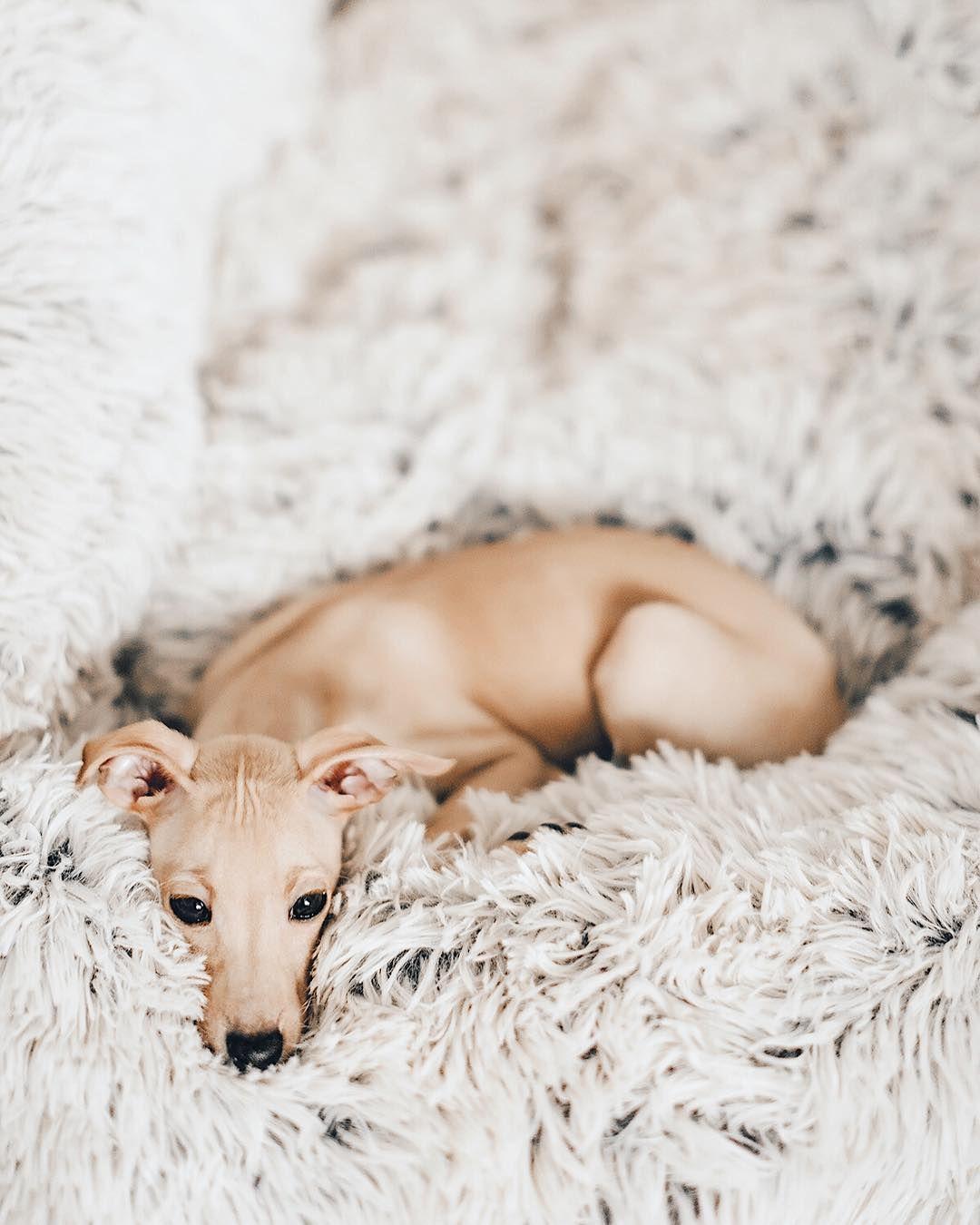 Bilder Von Kleinen Hunden Kostenlos - Bilder Von Kleinen Hunden Kostenlos