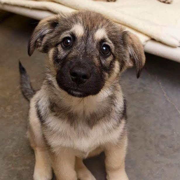 Bilder Von Kleinen Hunden - Bilder Von Kleinen Hunden