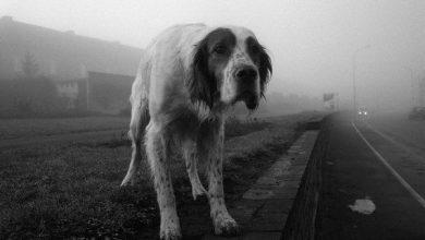 Bilder Von Kleinen Hunderassen 390x220 - Bilder Von Kleinen Hunderassen