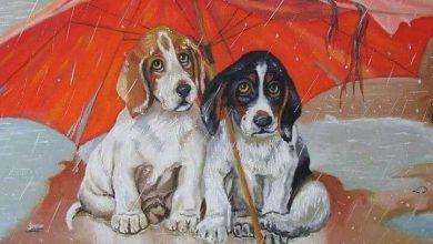 Bilder Von Kleinen Hunderassen Für Facebook 390x220 - Bilder Von Kleinen Hunderassen Für Facebook