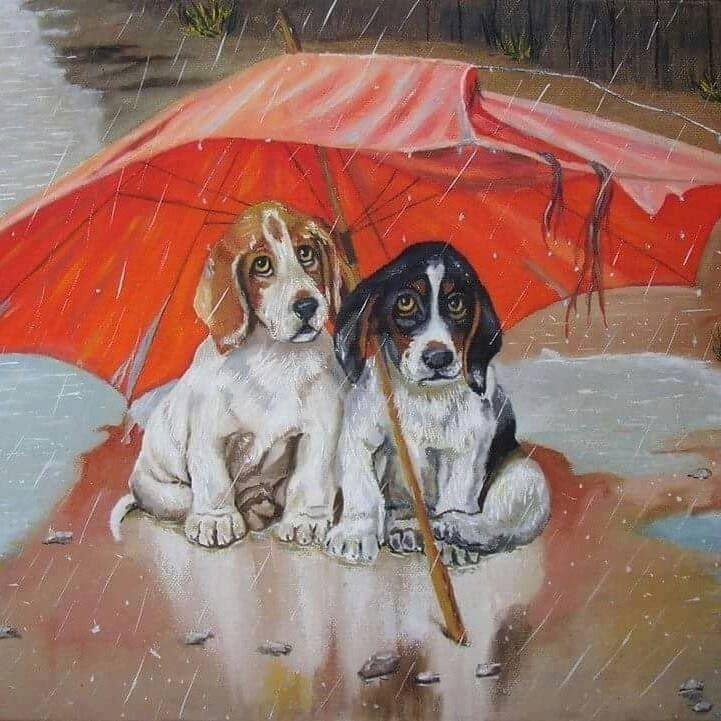 Bilder Von Kleinen Hunderassen Für Facebook - Bilder Von Kleinen Hunderassen Für Facebook