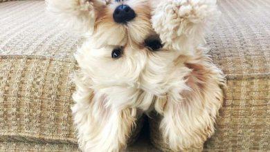 Bilder Von Kleinen Hunderassen Für Whatsapp 390x220 - Bilder Von Kleinen Hunderassen Für Whatsapp