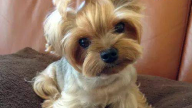 Bilder Von Kleinen Hunderassen Kostenlos Herunterladen 390x220 - Bilder Von Kleinen Hunderassen Kostenlos Herunterladen