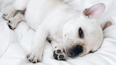 Bilder Von Lustigen Hunden Für Facebook 390x220 - Bilder Von Lustigen Hunden Für Facebook