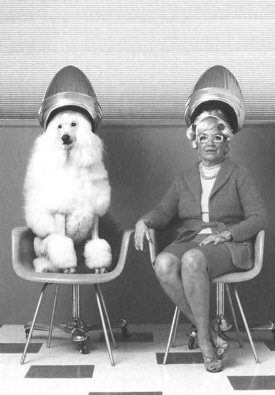 Bilder Von Lustigen Hunden - Bilder Von Lustigen Hunden