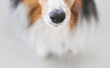 Bilder Von Süßen Hunden Für Whatsapp 353x220 - Bilder Von Süßen Hunden Für Whatsapp