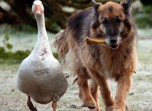 Bilder Von Süßen Hunden Kostenlos 300x220 - Bilder Von Süßen Hunden Kostenlos