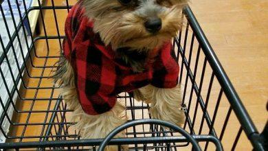 Bilder Von Süßen Hunden Kostenlos Herunterladen 390x220 - Bilder Von Süßen Hunden Kostenlos Herunterladen