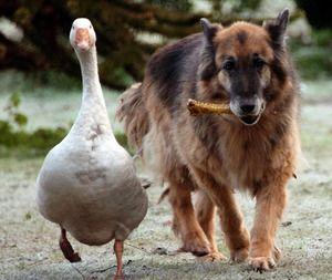 Bilder Von Süßen Hunden Kostenlos - Bilder Von Süßen Hunden Kostenlos