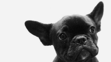 Bilder Von Verschiedenen Hunderassen Für Facebook 390x220 - Bilder Von Verschiedenen Hunderassen Für Facebook