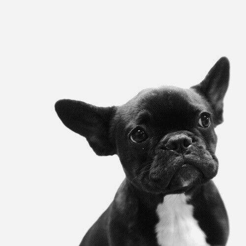 Bilder Von Verschiedenen Hunderassen Für Facebook - Bilder Von Verschiedenen Hunderassen Für Facebook