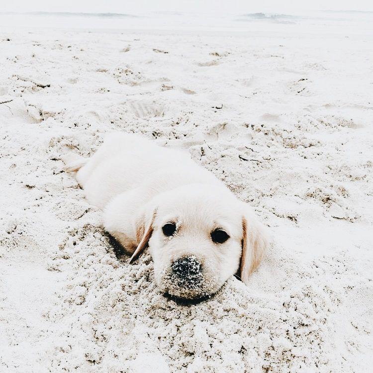 Bilder Von Verschiedenen Hunderassen - Bilder Von Verschiedenen Hunderassen