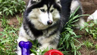 Bilder Welpen Hunde Für Whatsapp 390x220 - Bilder Welpen Hunde Für Whatsapp