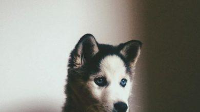Bilder Welpen Hunde Kostenlos Herunterladen 390x220 - Bilder Welpen Hunde Kostenlos Herunterladen