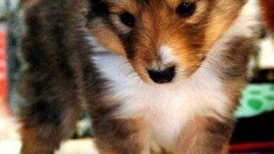 Bilder Zu Hunden 390x220 - Bilder Zu Hunden
