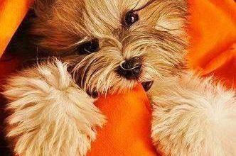 Bilder Zu Hunden Für Whatsapp 332x220 - Bilder Zu Hunden Für Whatsapp