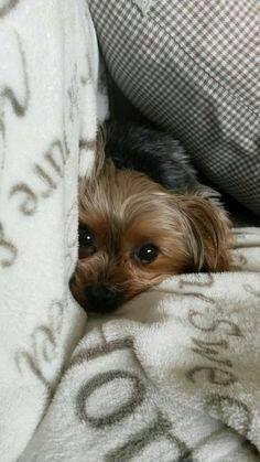 Bilder Zu Hunderassen Kostenlos - Bilder Zu Hunderassen Kostenlos